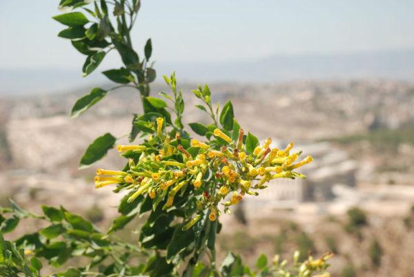 Nazaret. israel